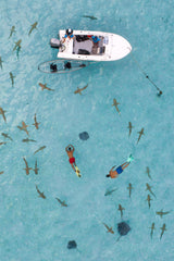 A head-on shot shows a boat surrounded by blacktip reef sharks and two swimmers.