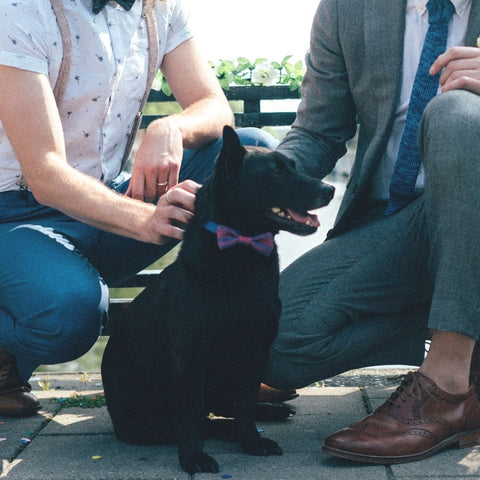 Black Dog in a Purple Bow Tie with Dog Dads