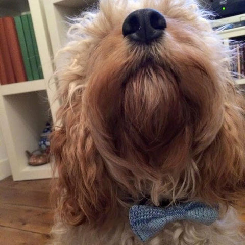 Wool & Water Pet Bow Tie