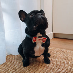 French Bulldog in Love Heart Bow Tie