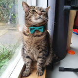 Tabby Cat in a Green Knitted Bow Tie beside window