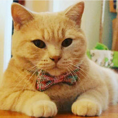 Cat's Miaow Festive Bow Tie: Cats & Tiny Dogs
