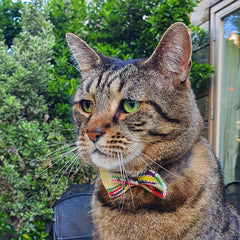 Tabby Cat in Multicoloured Cat Bow Tie Outside