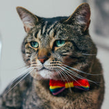 PRIDE Cat's Miaow Bow Tie: Cat / Tiny Dog