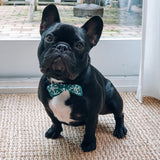 French Bulldog in Christmas Bow Tie
