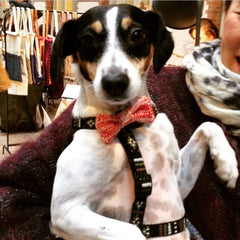 Bow Wow Tie: Small - Medium Dog (4 colours available)