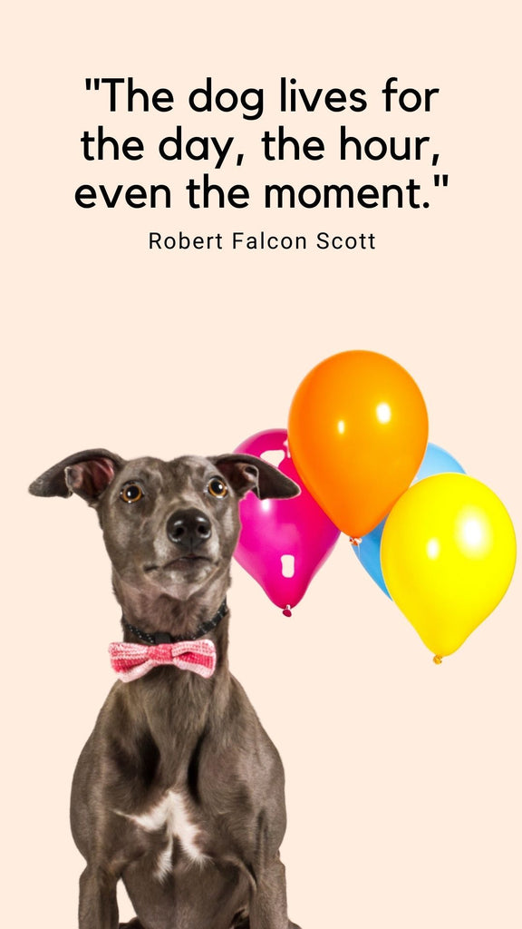 FREE Dog in a Bow Tie Phone Wallpaper