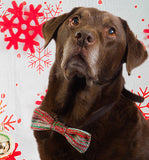 Festive Bow Wow Tie: Large Dog