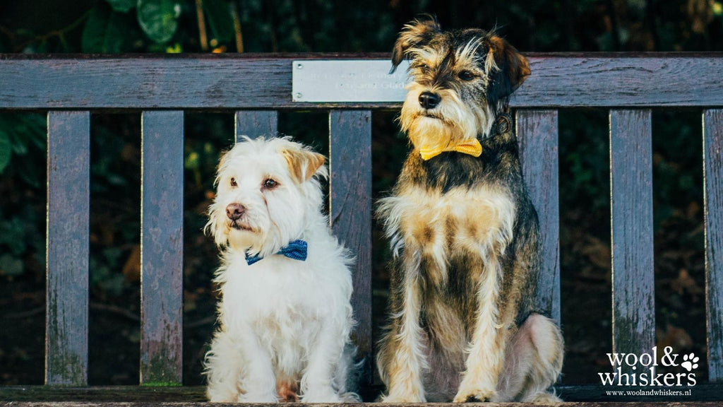 FREE Dog Chums in Bow Ties Desktop Wallpaper