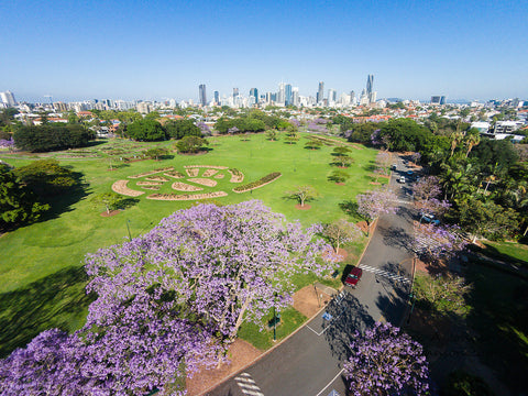 New Farm Park Brisbane with view of the city