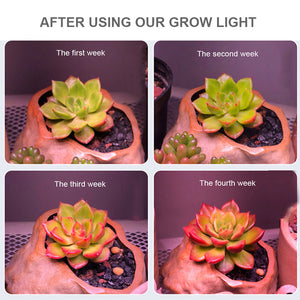2Pcs Of Led Cob Led Grow Light 150W Phyto Full Spectrum Lamp Led Indoor Lamp For Plants Grow Shop Box For Germination Flower Seeds