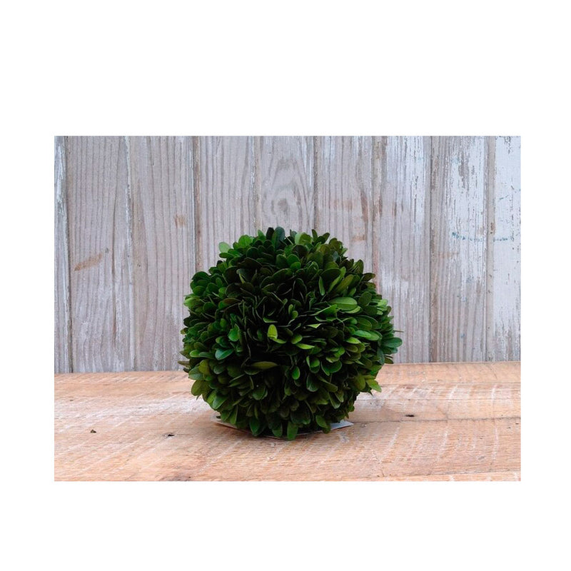 Preserved Boxwood Ball 6""