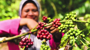 Indonesia Organic Swiss Water Process Decaf