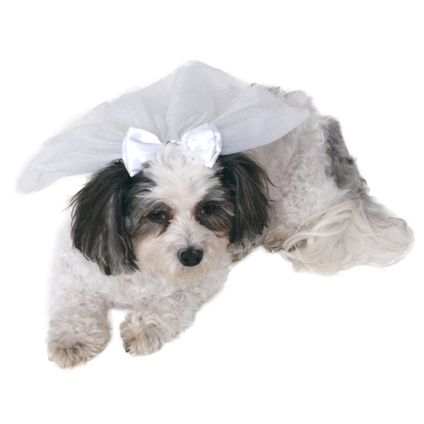 Wedding Veil  Pet