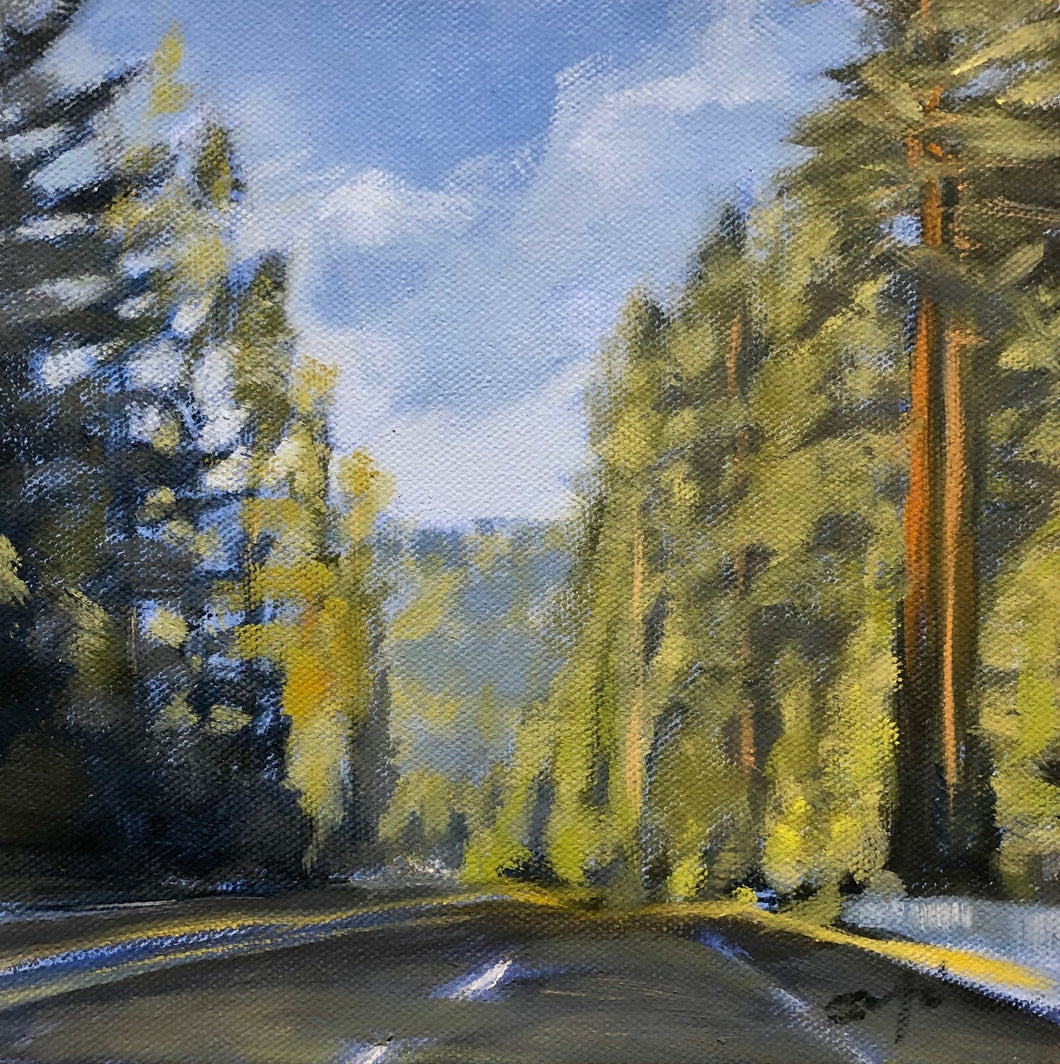 Redwoods on 101, 8