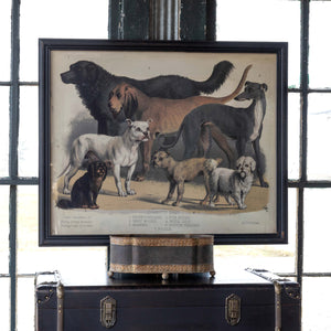 Domestic Dogs Framed Print