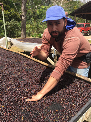 2015 El Pilon Natural Process Catuai - Costa Rica