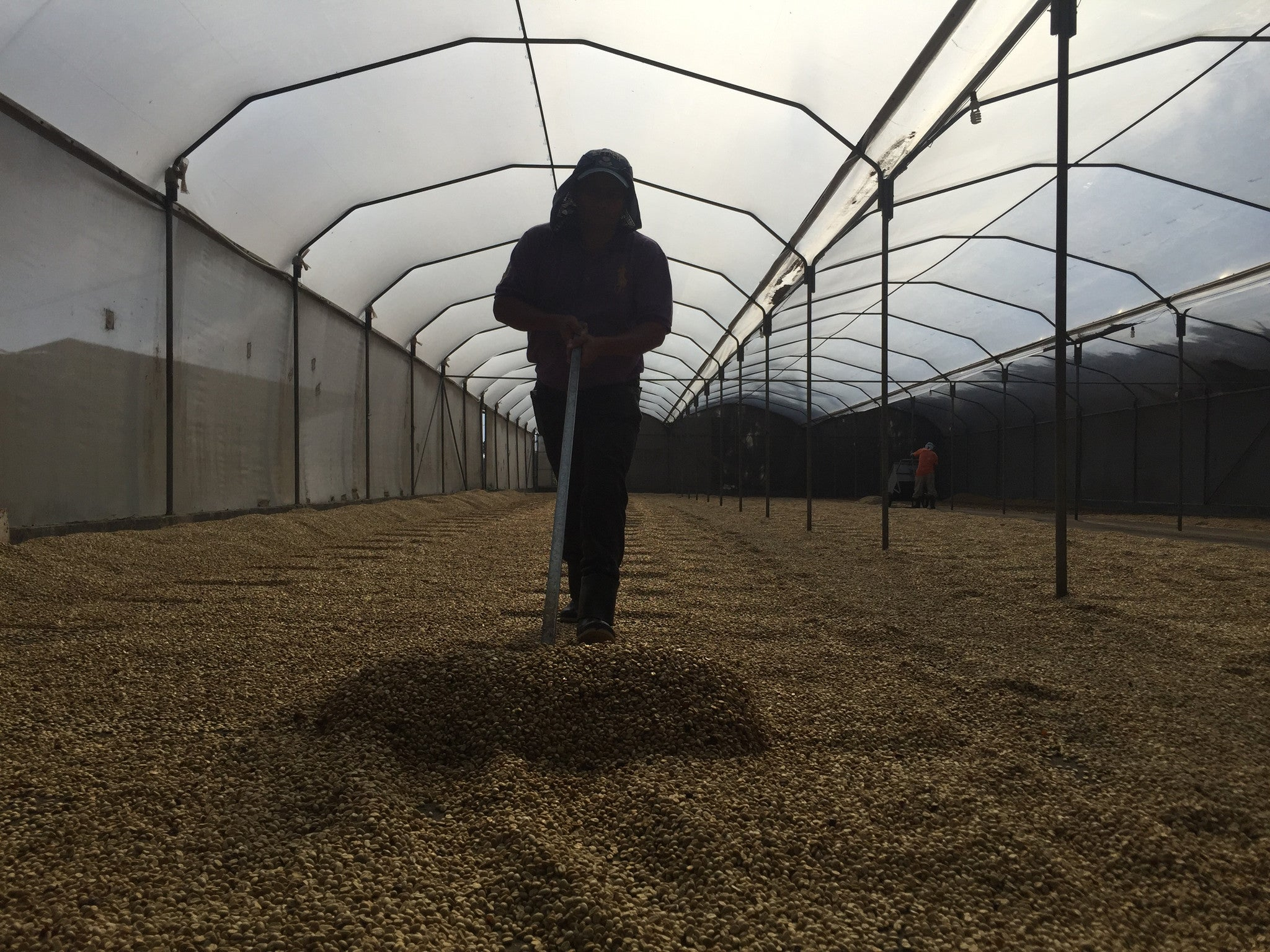 2016 Helsar de Zarcero Finca Santa Lucia Red Honey