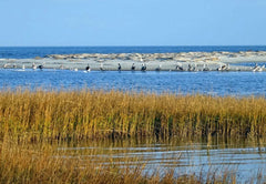 Proteus Inc. Salt Marshes, Tom McCormick's Work with Environmental Ultra