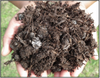 5 Cubic Organic Compost  (Medium 30MM )