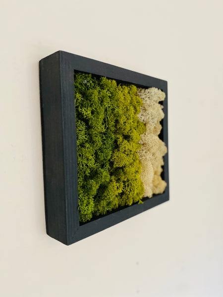 Moss Hexagon Wall Panels made with real moss. Mix and match these hexagons Squares panels plant wall. maintenance free!