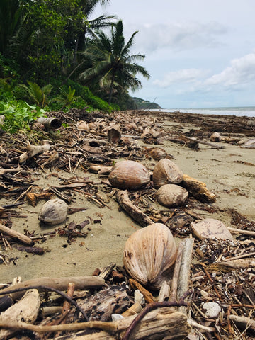 Coconuts on Port Douglas beach after monsoon conditions
