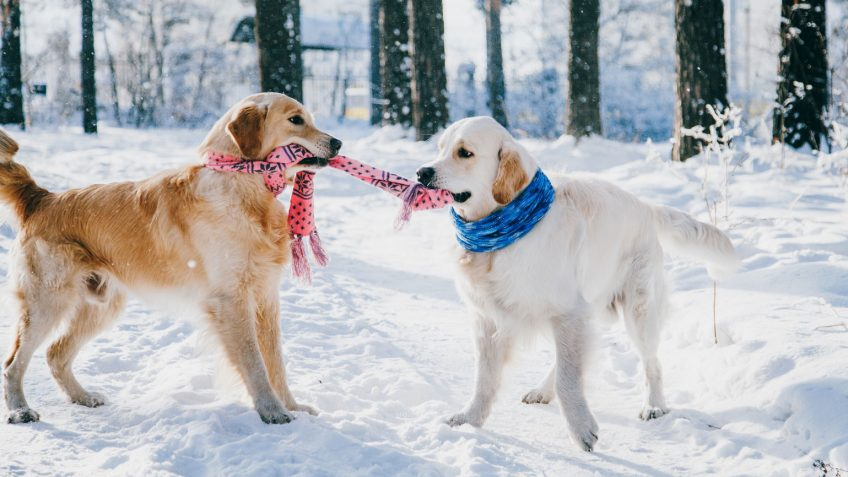 Cold Weather Safety Tips for Dogs: Prepare for the Winter