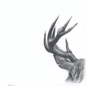 Deer Antler Greeting Card
