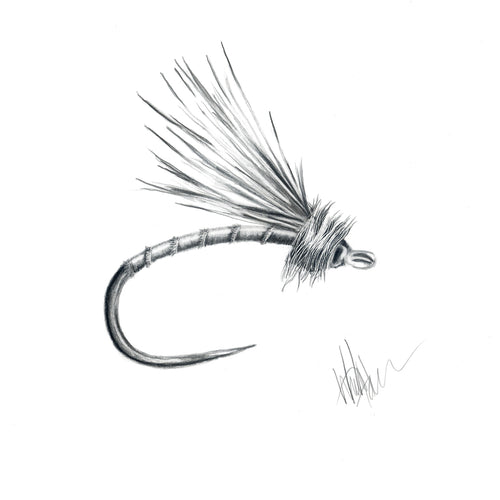 Egg-Laying Caddis Fly Art Print