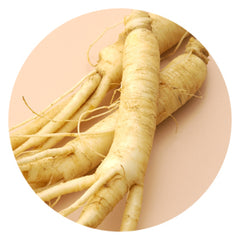 Asian Ginseng Root Extract