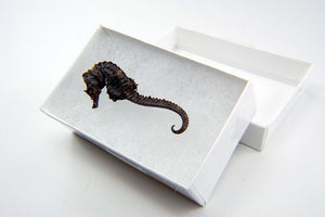 Seahorse Necklace - Gwen Delicious Jewelry Designs