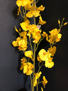 Yellow dancing mini orchid