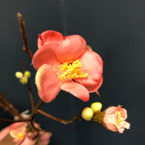 Coral Japanese Quince Spray