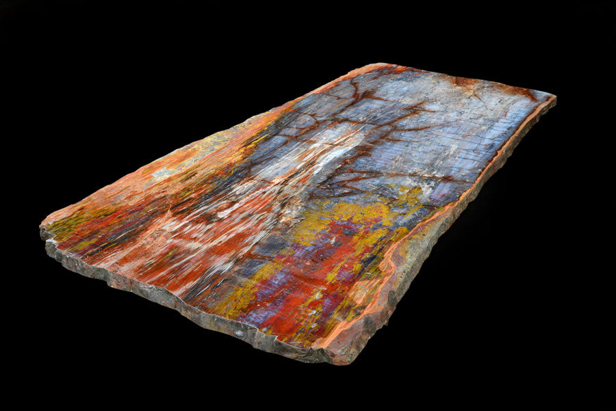 Unique & Large Petrified Wood Board From Arizona with Beautiful Colors & Patterns