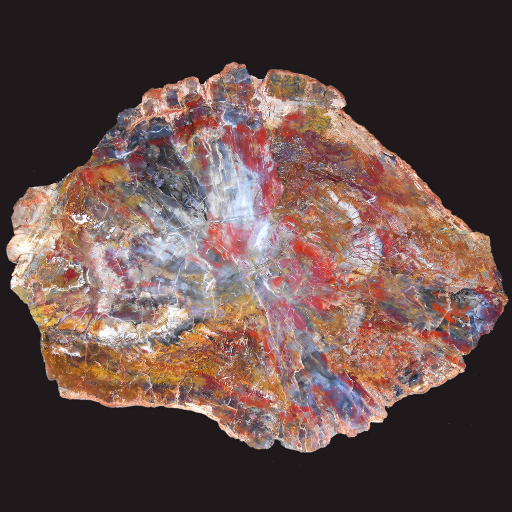 Buy Petrified Wood Slabs
