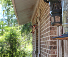 Load image into Gallery viewer, Buck Lee's Naturals Platform Nest Shelf for Hummingbirds