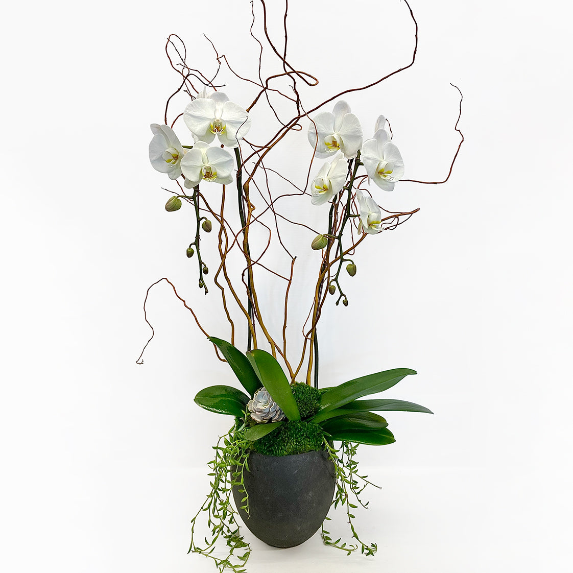 Two Stems Of Orchids