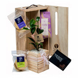 Coffee and Cake Living Tree Gift box