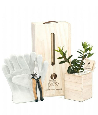 Secateurs and Gloves, Gardener's Gift Box with Tree