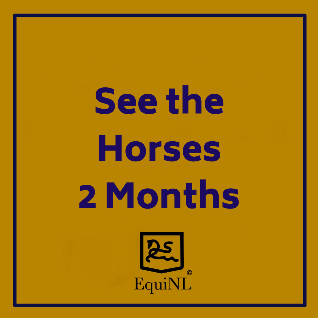 Access for 2 months to the Horses which are for sale now!