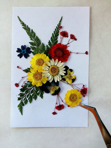 A photo of dry colorful flowers pressed on a white paper