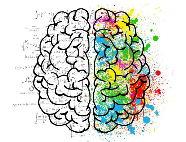 An idealistic drawing of the brain with multiple colors mathematical equation describing the psychology and mind of the brain