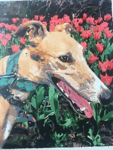Dog with flowers and collar on a Paint By Numbers - Choose Your Size - BestPaintByNumbers - Paint by Numbers Custom Kit