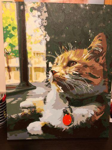Paint By Numbers - Pets - BestPaintByNumbers - Paint by Numbers Custom Kit