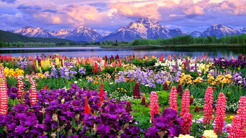 Picturesque Grand Teton - BestPaintByNumbers - Paint by Numbers Custom Kit