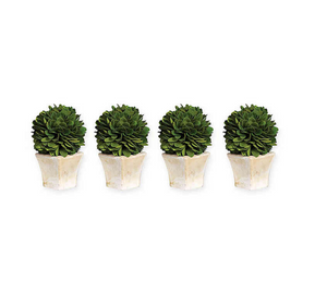 Boxwood Topiary in Square Pot