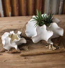 Load image into Gallery viewer, Organic Ceramic Planters