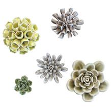 Load image into Gallery viewer, Ceramic Succulents
