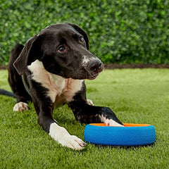 Pet Chuckit Fetch Wheel Toy for Dogs