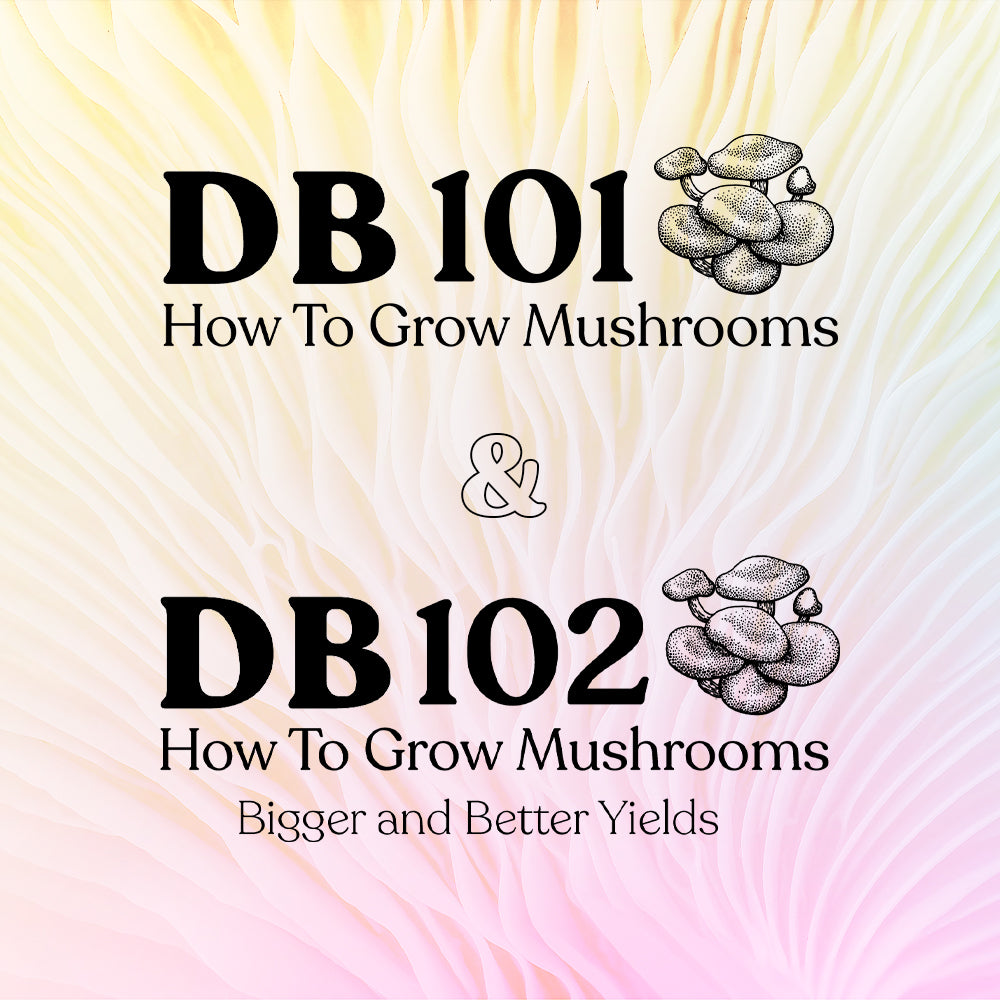 DB 101: How to Grow Mushrooms – Special Price w/ Bundle
